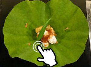 食の雫 吟(しょくのしずく ぎん)香川県高松市の創作割烹店 鱧